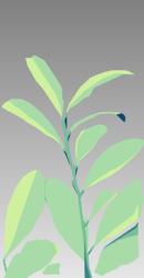 Coca Pflanze